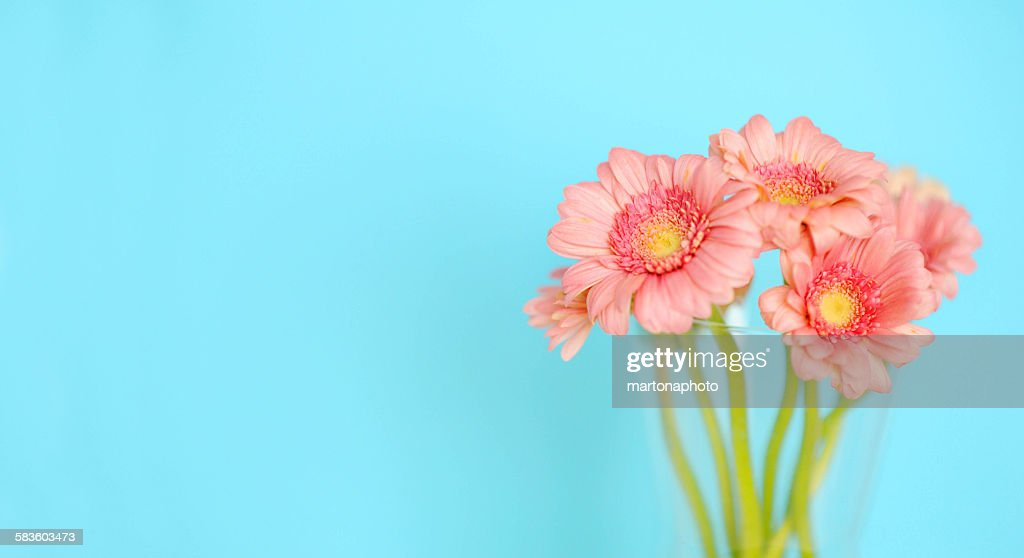 Vase of pink flowers on turquoise background : Foto de stock