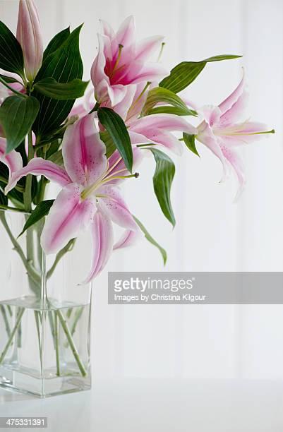 vase of stargazer lillies - stargazer lily stock photos and pictures