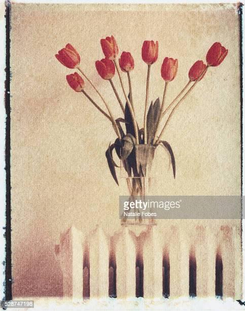 vase of tulips on a radiator - breekbaarheid stockfoto's en -beelden