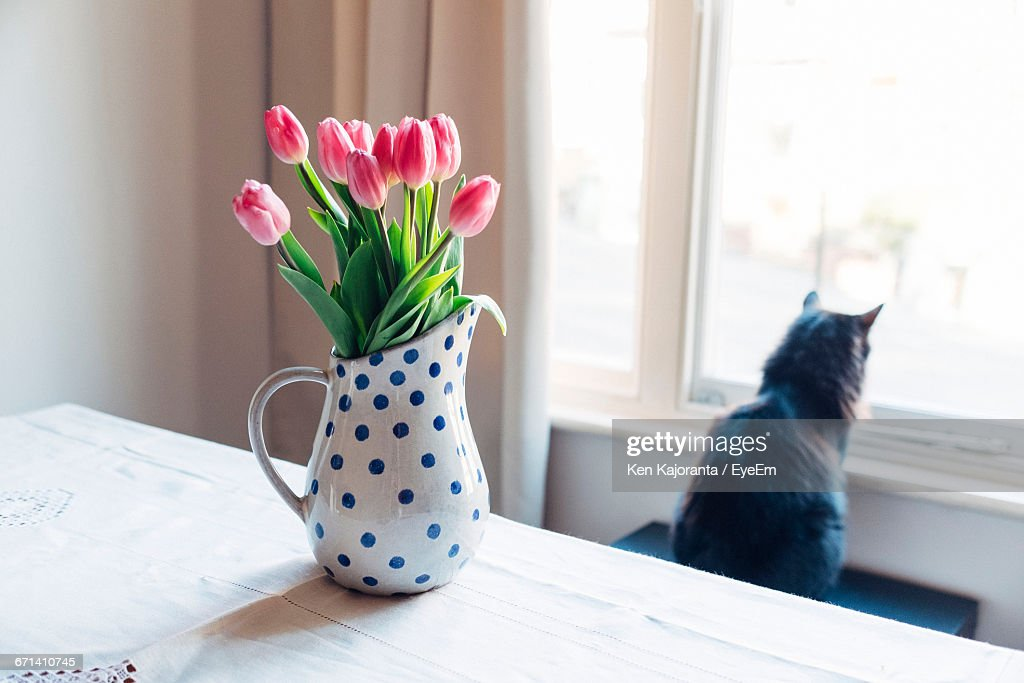 Vase On Table With Cat Looking Through Window Stock Photo Getty Images