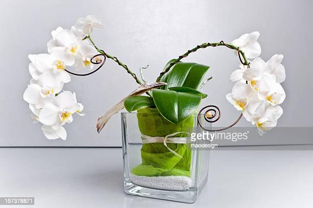 Vase mit Orchideen