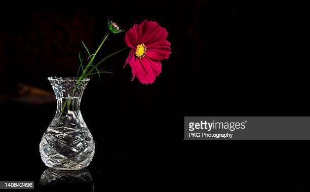 Vase with red flower on black background