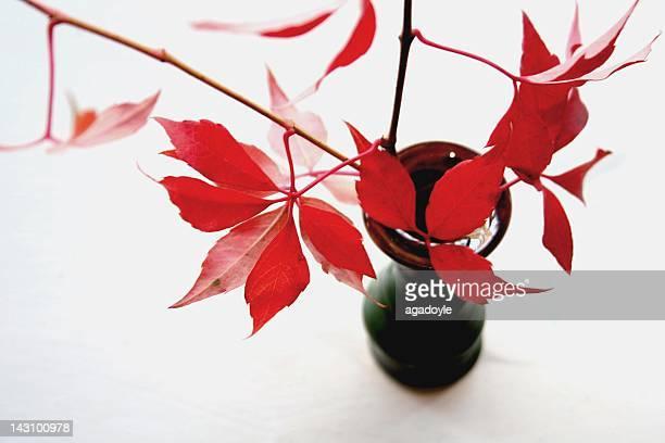 Vase with wild vine leaves