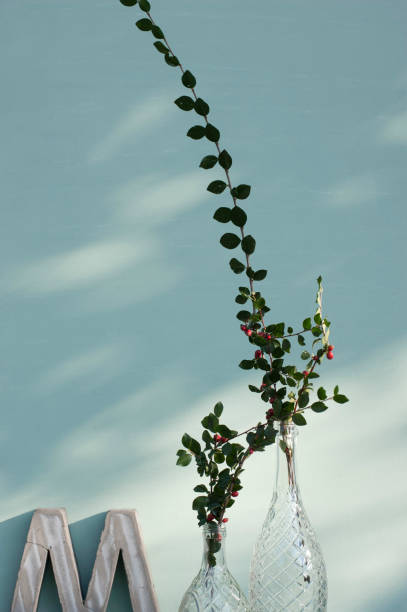 Vases with twigs of cotoneaster