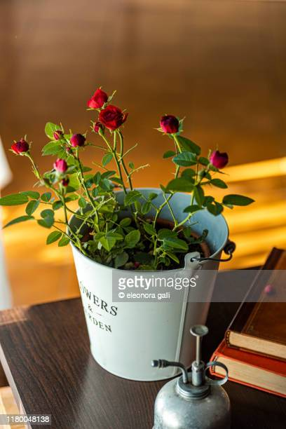 vaso di rose - vaso stock pictures, royalty-free photos & images