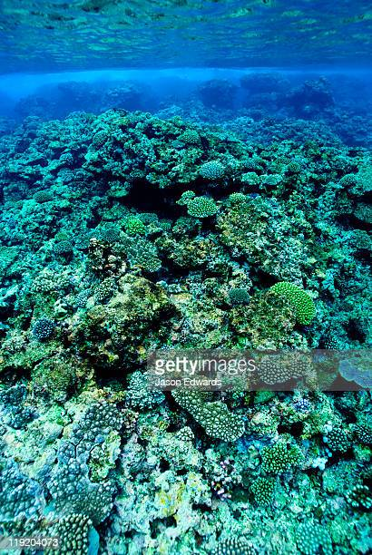 Warm, shallow seas over the jagged surface of a tropical coral reef.