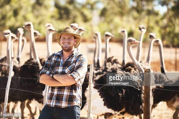 yo he estado manejando este éxito avestruz granja durante años - avestruz fotografías e imágenes de stock