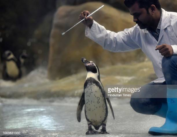 Veermata Jijabai Udyan celebrates 3rd birthday of 'Mr Molt' one of the Humboldt penguin at Byculla on July 21 2018 in Mumbai India