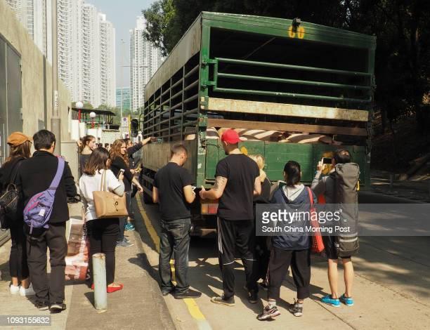 Vegan activists, members of the Hong Kong Pig Save, a local vegan activist group stage a protest at Tsuen Wan Abbatoir, accompanied by Australian...