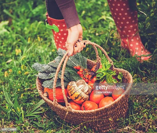 Gemüse Korb