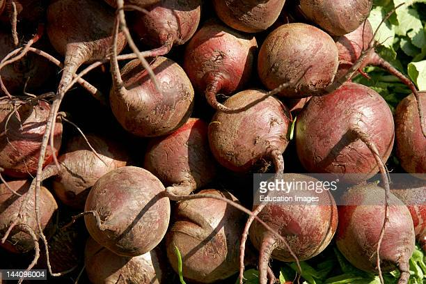 Vegetable Beetroot Used For Green Salad Or As Separate Dish