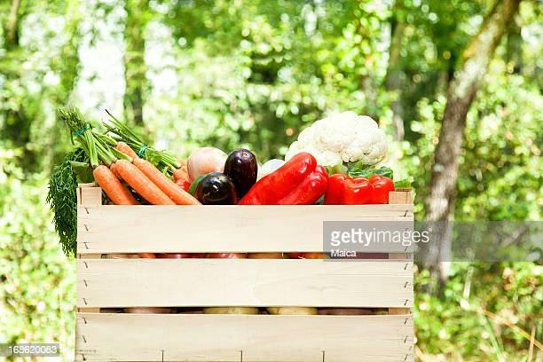 Boîte légumes en plein air