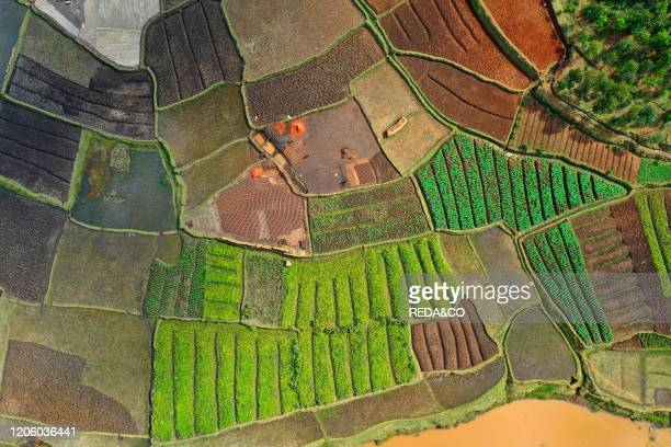 Vegetable cultivation and brick making on the rice fields on the National Route RN7 between Antsirabe and Antananarivo, Madagascar.
