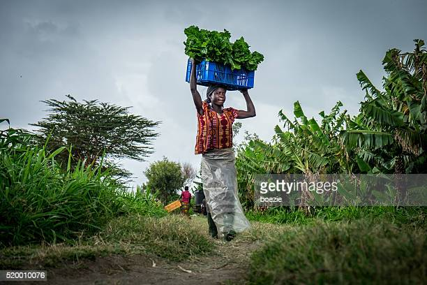 vegetable farmer - kenya stock pictures, royalty-free photos & images