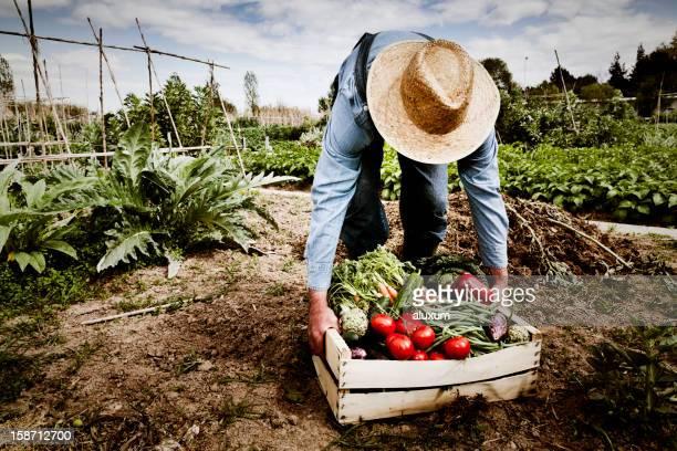 Jardín de vegetales