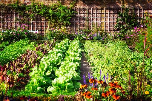 Vegetable garden 613517018