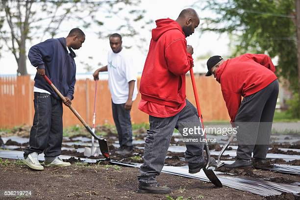 A vegetable garden planted by the nonprofit Detroit organization Urban Farming begins to take shape on abandoned lots in an area of Detroit that was...