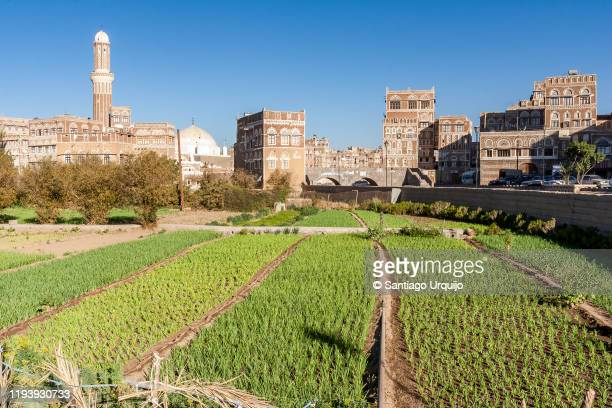 vegetable gardens in old town of sanaa - sanaa stock pictures, royalty-free photos & images