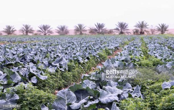 Vegetable grow in a farm in the municipality of Al Shahania 40 kilometers northwest of the Qatari capital Doha on April 5 2019 Since June 2017 Qatar...