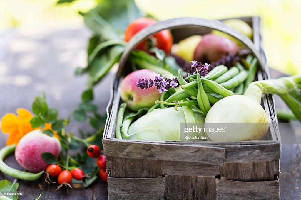vegetable harvest freshness from garden autmun : Stock Photo