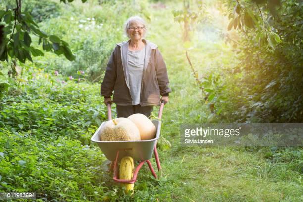 Gemüseernte aus dem Garten: senior Frau Carrrying Kürbisse mit Schubkarre