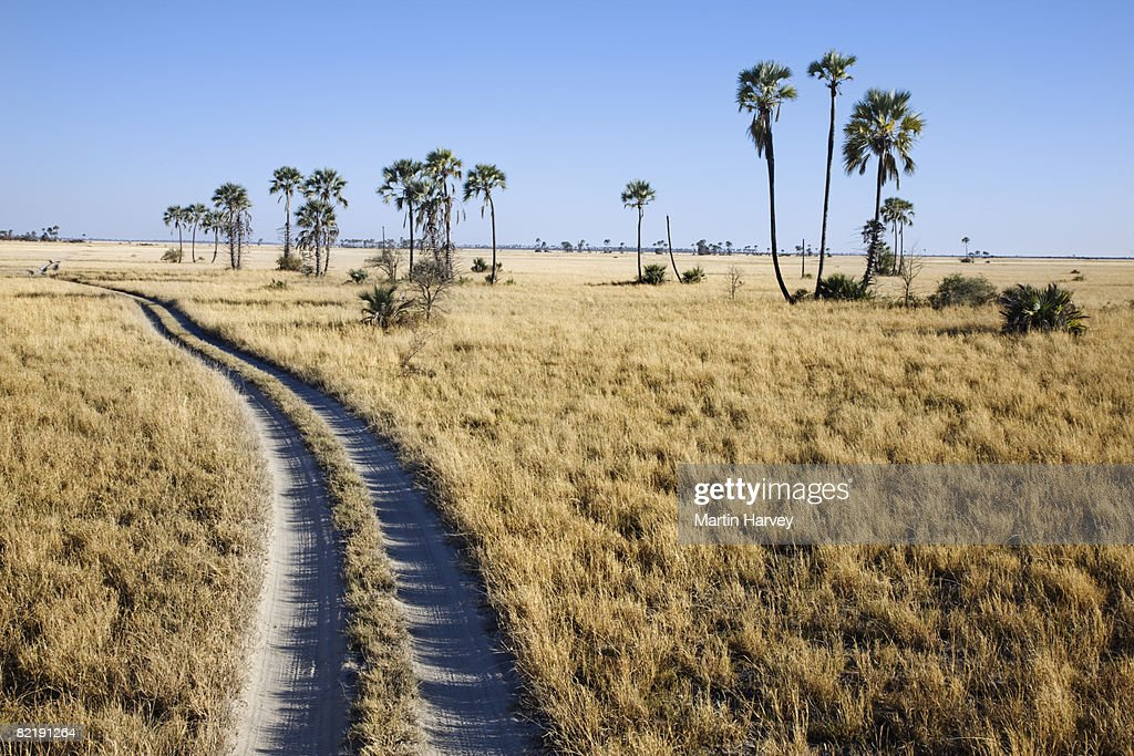 Vegetable palms next to dirt road. : Stock Photo