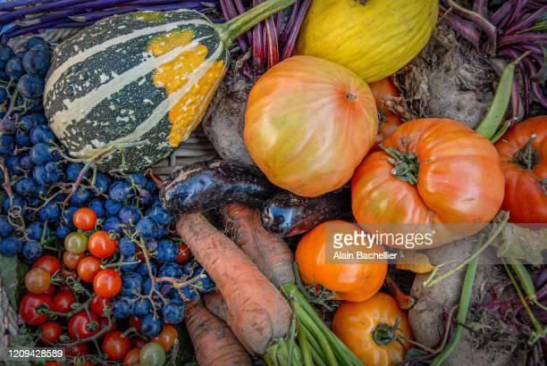 vegetable - alain bachellier photos et images de collection