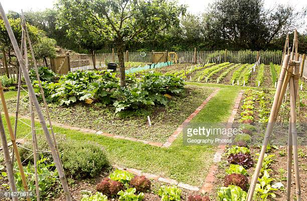 Vegetable plot at Potager Garden, Constantine, Cornwall, England, UK.