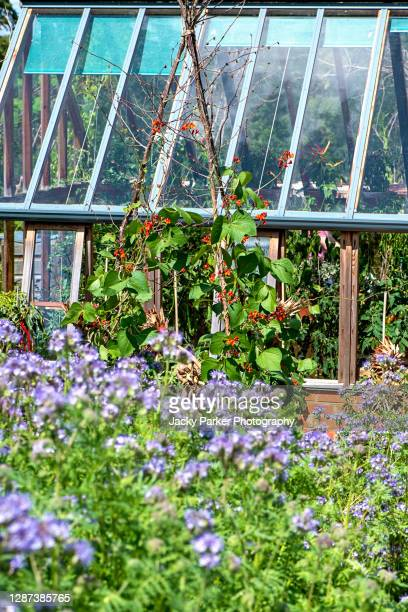 vegetable summer garden with rustic trellis growing climbing green beans and a glasshouse with crops - vegetable stock pictures, royalty-free photos & images