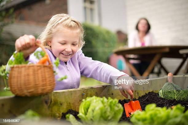 Tiempo de vegetales