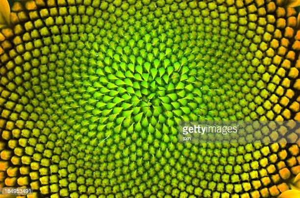 vegetable vertigo - sunflower stock pictures, royalty-free photos & images