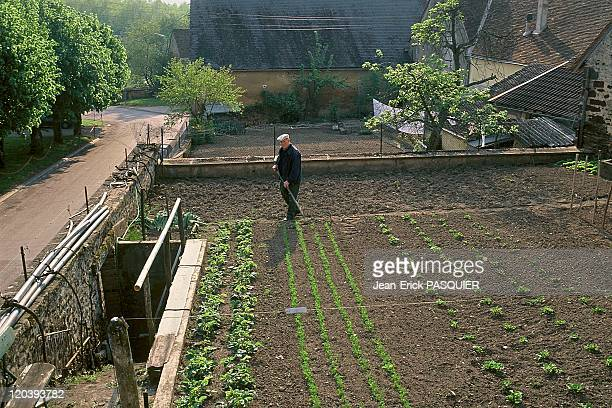 Vegetables gardens in Saint Sauveur Burgundy France next to Colette's garden