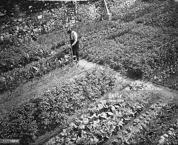 Vegetables growing in the moat at the Tower of London, as a result of the Grow More Food campaign during World War II, 7th June 1940.