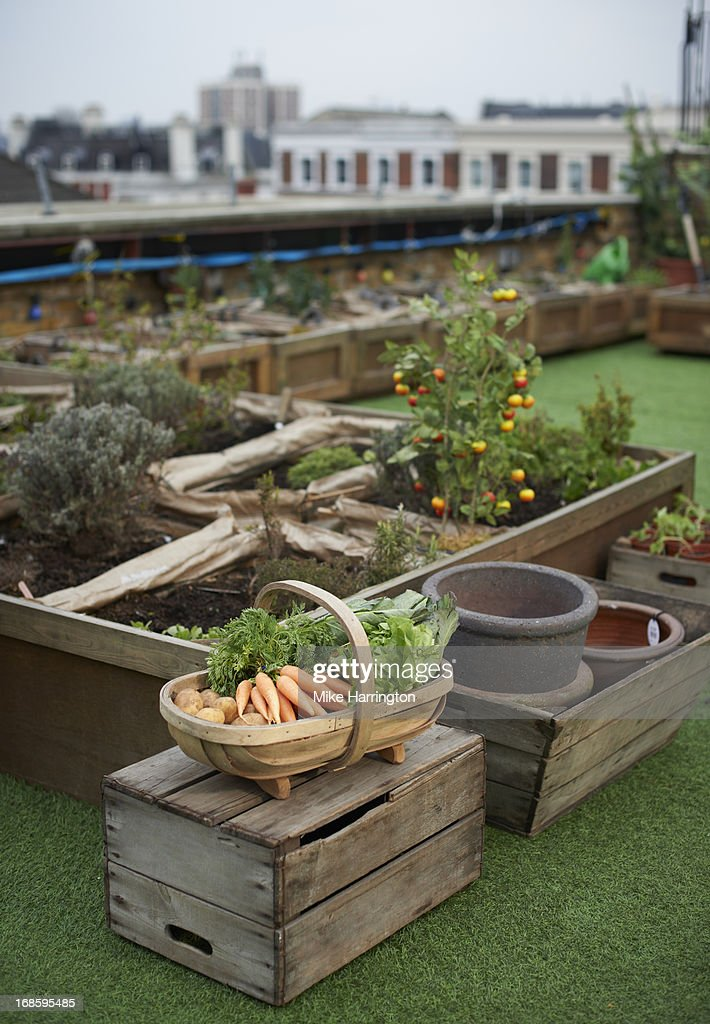 Vegetables In A Basket In Urban Roof Garden High Res Stock Photo