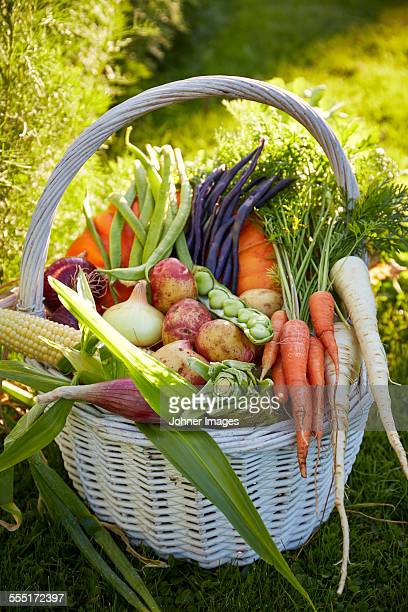 vegetables in basket - rutabaga stock pictures, royalty-free photos & images