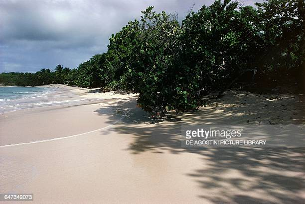 Vegetation along a sandy beach Les Saintes archipelago Guadeloupe Overseas department of the French Republic