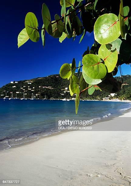 Vegetation along Cane Garden Bay Tortola British Virgin Islands