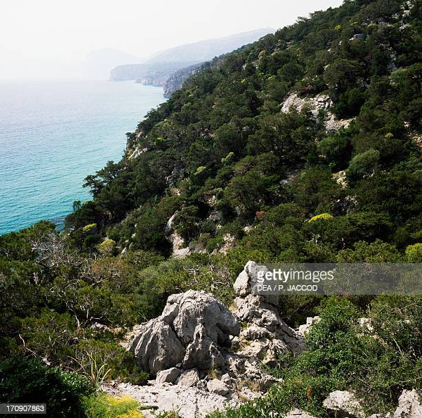 Vegetation and Phoenician juniper along the coast of the Gulf of Orosei National Park of the Bay of Orosei and Gennargentu Sardinia Italy