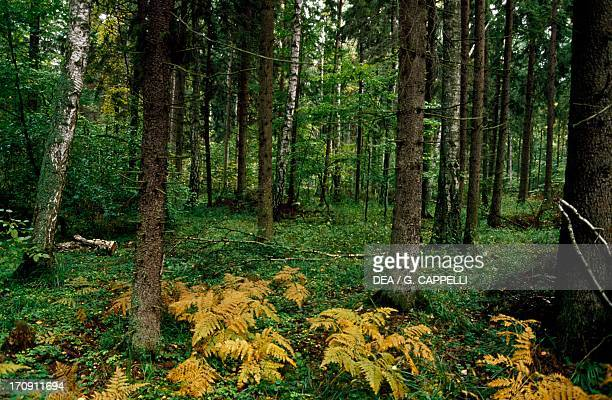 Vegetation, Bialowieza Forest National Park , Poland.