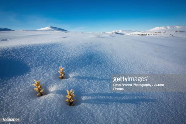 Vegetation emerging from winter in Canadian Arctic