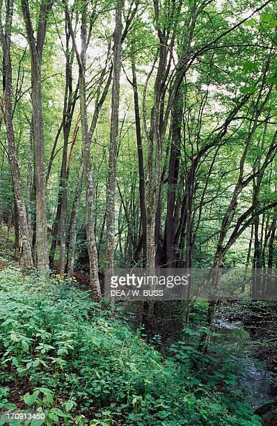 Vegetation in the Rhine Valley, High Taunus Nature Park , Germany.