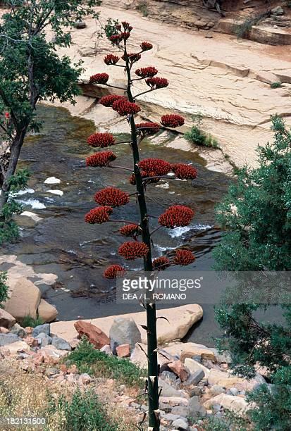 Vegetation in the Slide Rock State Park Oak Creek Canyon Arizona United States of America