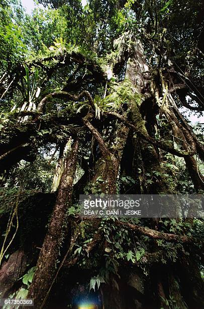 Vegetation of the Mesoamerican tropical forest Selva Lacandona State of Chiapas Mexico