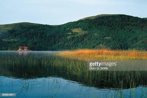 Vegetation on Lake Abant Bolu on the coast of the Black sea Turkey