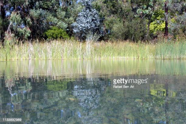 Vegetation reflection on pond waters