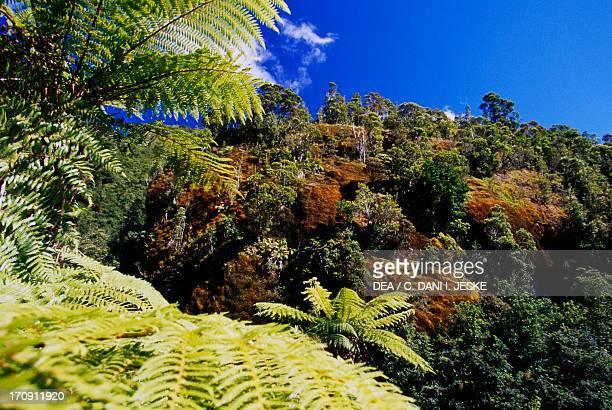 Vegetation Westland Tai Poutini National Park Te Wahipounamu West Coast South Island New Zealand