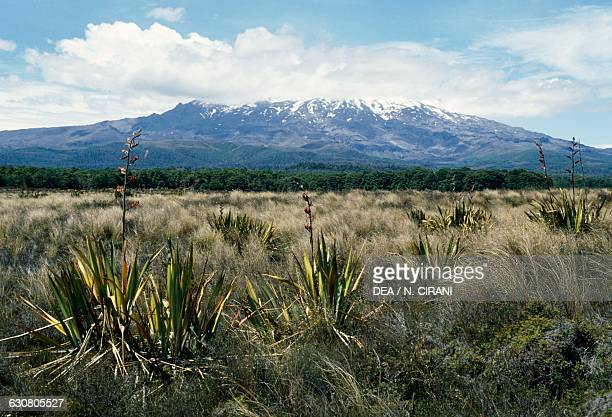 Vegetation with Mount Ruapehu in the background New Zealand