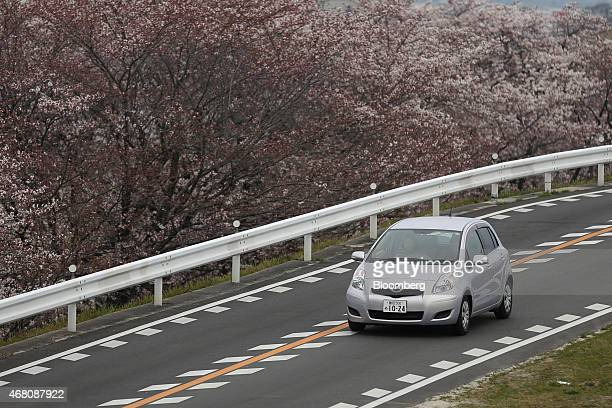 Vehicle drives past cherry blossom trees in Toyota City, Aichi Prefecture, Japan, on Sunday, March 29, 2015. With Toyota Motor Corp. Set to earn more...
