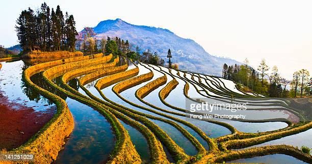 veins of earth - yuanyang stock pictures, royalty-free photos & images