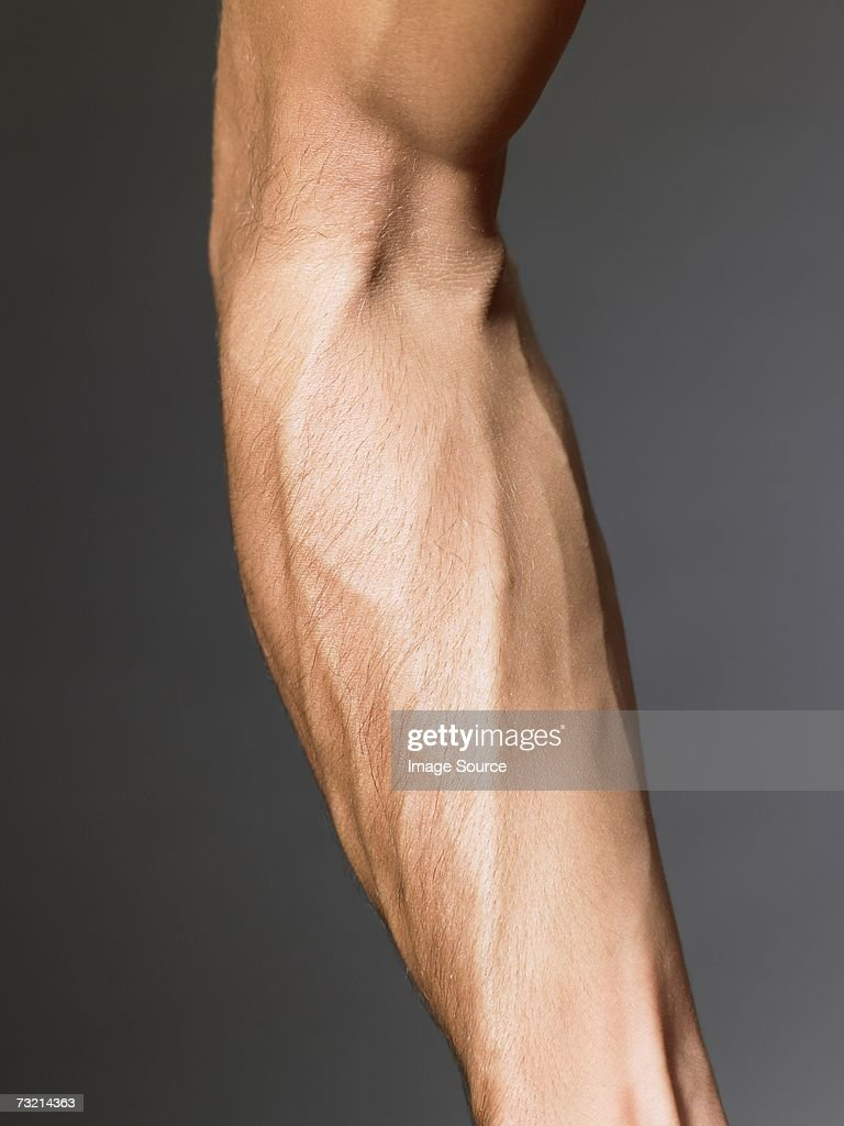arm stock photos and pictures getty images